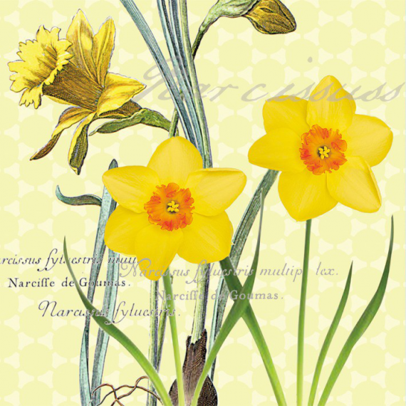 Serviettes papier narcisses du printemps - Lot de 20