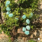 Guirlande de pompoms menthe