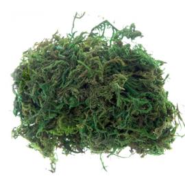 Sachet mousse vert