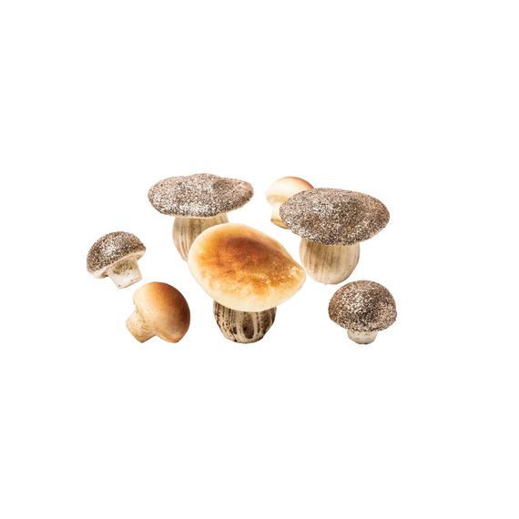 Assortiment 7 champignons